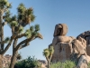 JoshuaTreeNationalpark1