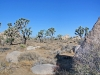 JoshuaTreeNationalpark2